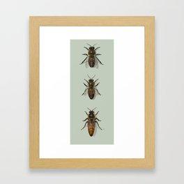 Honey Bee Family Framed Art Print
