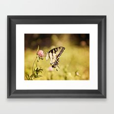 YELLOW SWALLOWTAIL BUTTERFLY Framed Art Print
