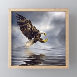 Young Bald Eagle Swooping Framed Mini Art Print