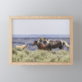 South Steens Stallion with Mare and Foal Framed Mini Art Print