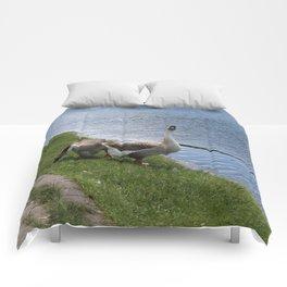 big birds Comforters