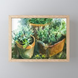pots with plants, watercolor sketch from nature Framed Mini Art Print