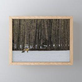 Beautiful Red Fox, No. 1 Framed Mini Art Print