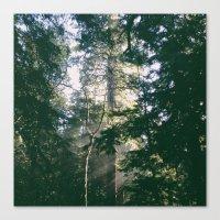Tree Light Canvas Print