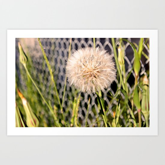 Oversized Puff - Ready to break apart and fly away. Art Print