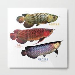 3 types of Asian arowana Metal Print