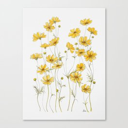 Yellow Cosmos Flowers Canvas Print