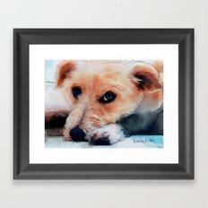 Toffee dog Framed Art Print