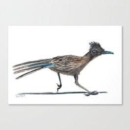 Watercolor Birds: Greater Roadrunner Canvas Print