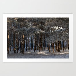 Snowy Pine Sequence Art Print