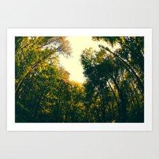 Sweet Surroundings  Art Print