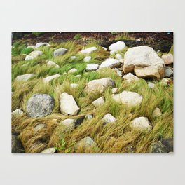 Maine Seagrass Canvas Print
