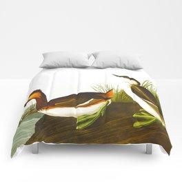 Eared Grebe John James Audubon Scientific Illustration Birds Of America Drawings Comforters