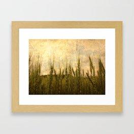 Light in the Grasses Framed Art Print