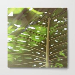 Tropic Light Metal Print