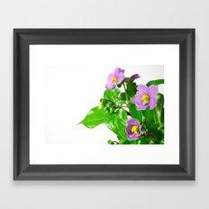 Blooming persian violet Framed Art Print