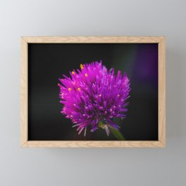Purple Flower Spike by Reay of Light Photography Framed Mini Art Print