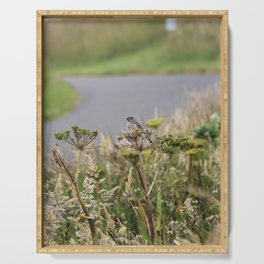 Crowned Sparrow Serving Tray