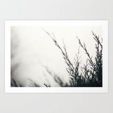 winter's light Art Print