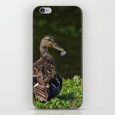 Feathered Mallard iPhone & iPod Skin