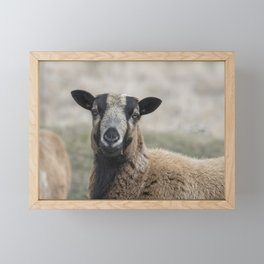 Barbados Blackbelly Sheep Portrait Framed Mini Art Print