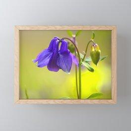 Purple Columbine In Spring Mood Framed Mini Art Print