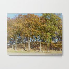 Edge of a Forest  Metal Print