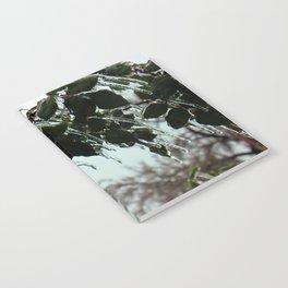 fROSEn Notebook