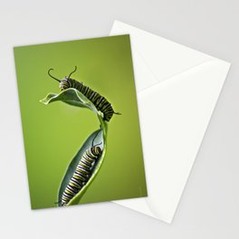 Monarch Caterpillars Stationery Cards