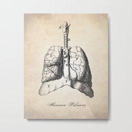 Human Anatomy Drawing Lungs Metal Print