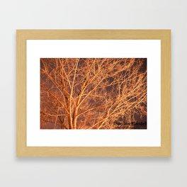 Tree @ Night Framed Art Print