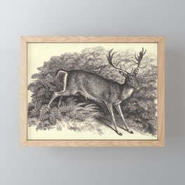 Antique Deer Framed Mini Art Print