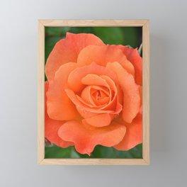 Orange Rose Framed Mini Art Print