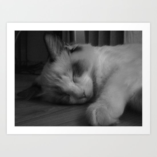 Sleeping ragdoll cat. Art Print