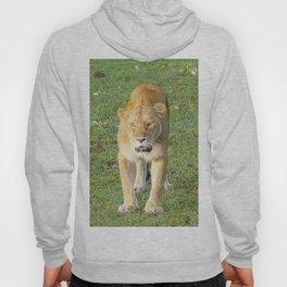 Extraordinary Animals - Lioness Hoody