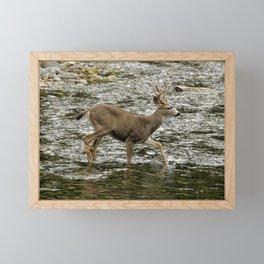 Young Buck Crossing The River Framed Mini Art Print