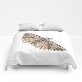 Montana Six-plumed Moth (Alucita montana) Comforters