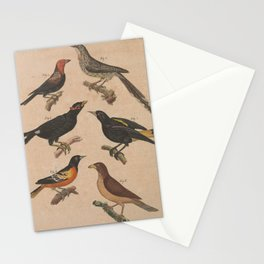 phytotoma tridactyla pica paradoxa Hill Myna cacicus persicus Baltimore Oriole Yellow billed Oxpecker13 Stationery Cards
