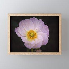 Poppy by Reay of Light photography Framed Mini Art Print