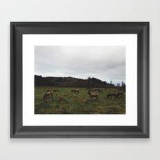 Elk near Orick, Ca Framed Art Print