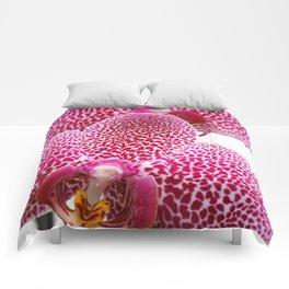 Phalaenopsis orchid Comforters