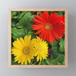 Colorful Daisies Framed Mini Art Print