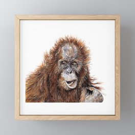 Sumatran Orangutan Framed Mini Art Print