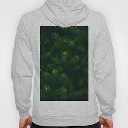 Close Up Of Evergreen Pine Leaves Hoody