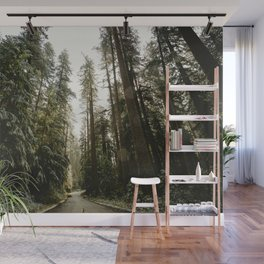 Redwood Forest Adventure III - Nature Photography Wall Mural