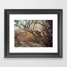 January cats Framed Art Print