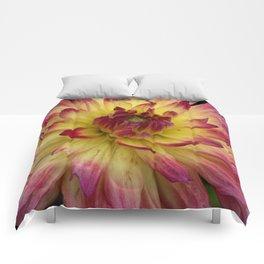 Purple Dahlia 69 Comforters