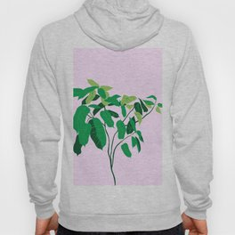 ficus on pink background Hoody