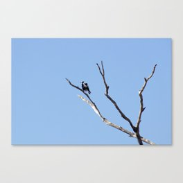 The Magpie that Comes and Goes Canvas Print