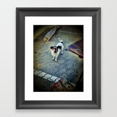 Homeless dog Framed Art Print